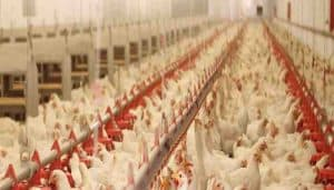 start a poultry farm business in india